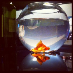 That's (one of) my fish.