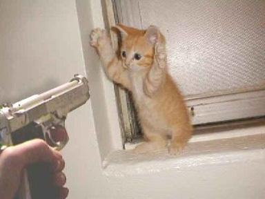 cat-robbery