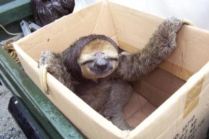 Sloth-in-a-Box: for the Best Christmas Ever