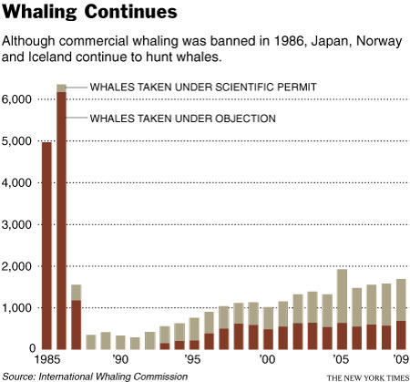 Whaling Continues   1985-2009