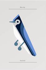 Blue Jay by Josh Brill