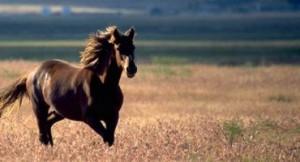 wild_horsespar38442image3702001gif