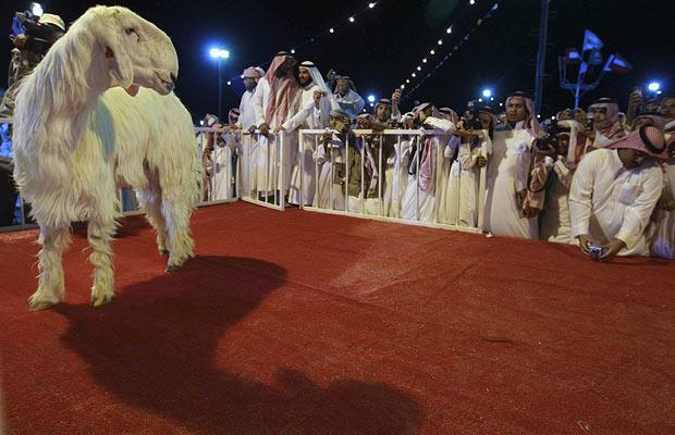 goat-beauty