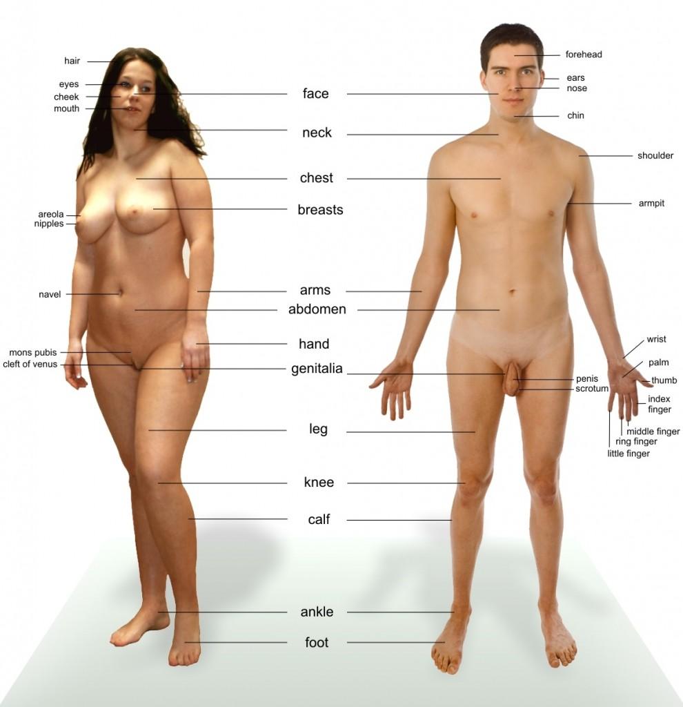 porno-anatomiya-zhenskogo-tela
