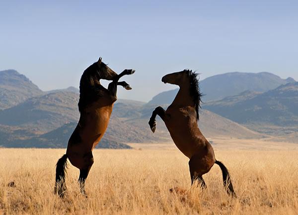wild-horses.jpg