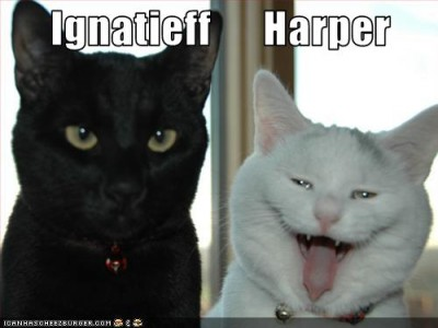 Ignatieff & Harper LOLcat from Cartoon Life